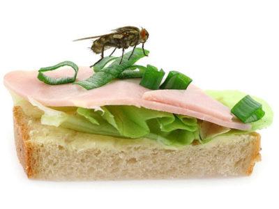 Fly on Sandwich